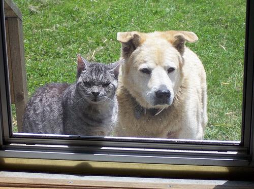 kutya-es-cica