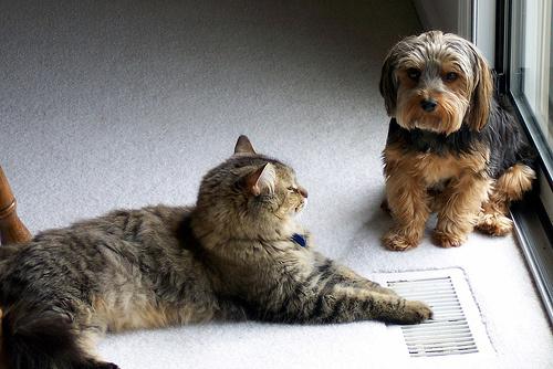 macska-es-kutya