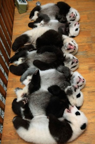 pandasor