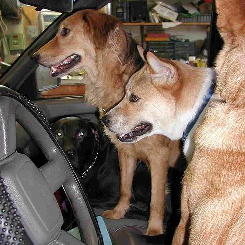 kutyak-kocsiban