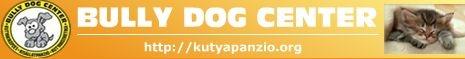 Bully Dog Center Kutyapanzió