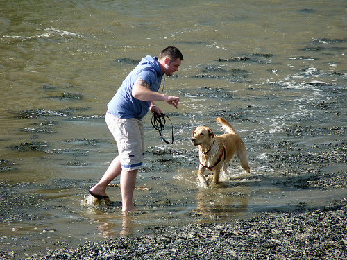 pancsolo-kutya