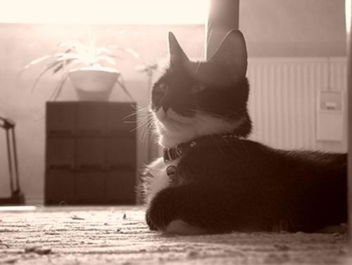 macska-gazdit-keres