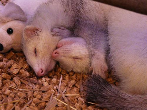 vadaszgorenyek-alszanak