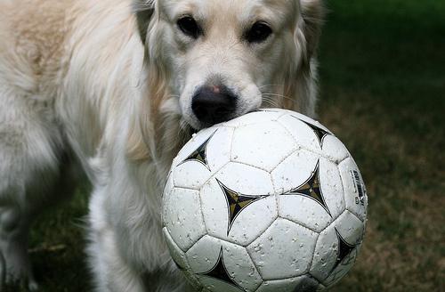 kutyanak-focilabda