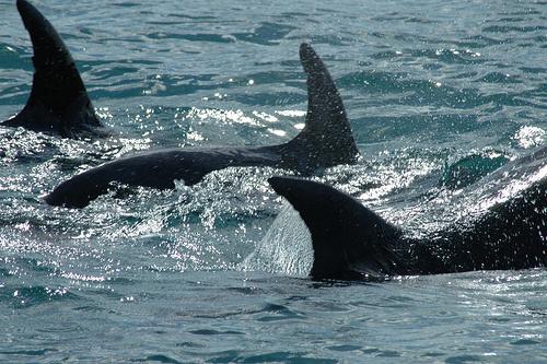 delfin-a-tengerben