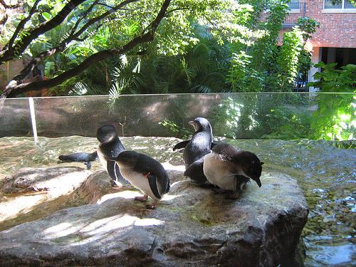kek-pingvin