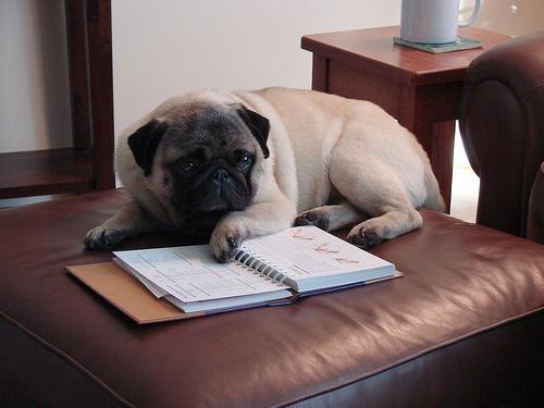 kutya-olvas