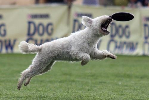 repulo-kutyak