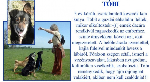 kutya-ingyen-tobi