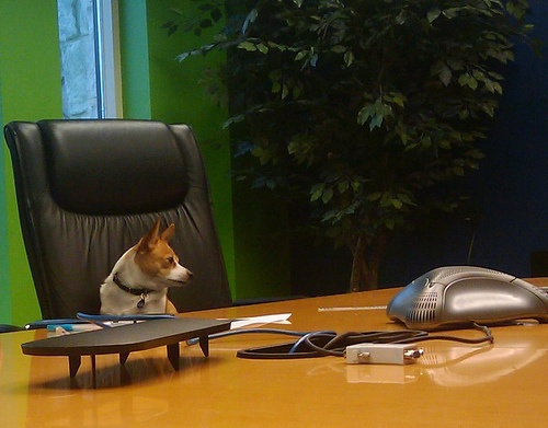 kutya-az-irodaban