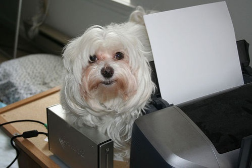 kutya-iroda