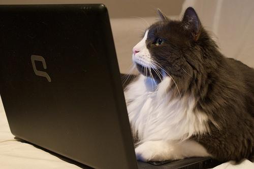 macska-laptop
