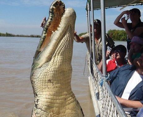 orias-krokodil-kep