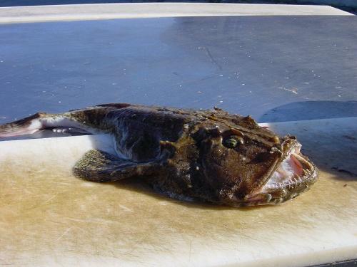 europai-horgaszhal