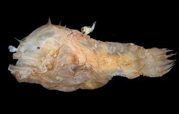 horgaszhal