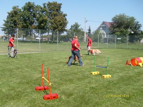 kutya-trening