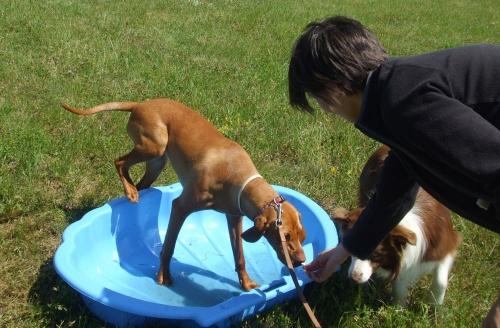kutya-training
