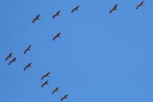 vonulo-madarak
