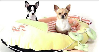 kutyamodell-verseny