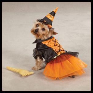 vicces_kutyaruha-halloween