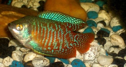a-legfontosabb-eszkzk-kezd337-akvaristknak-guppi-kvek