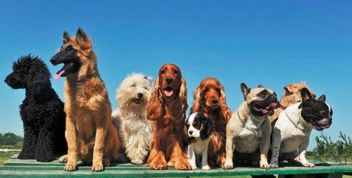 magyarországi kutyatartás