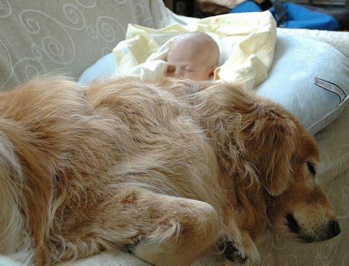 kutyával alvás