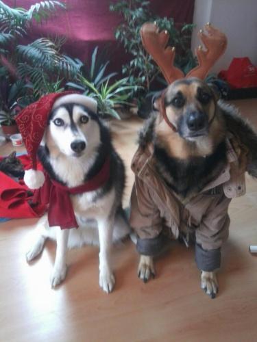 kutyák kutyaruhában