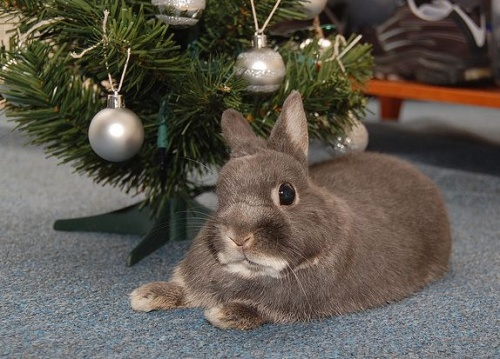 karácsony és nyuszi