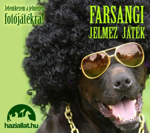haziallat_farsang_520x450