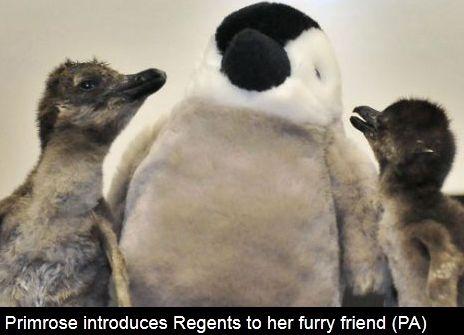 pingvin3