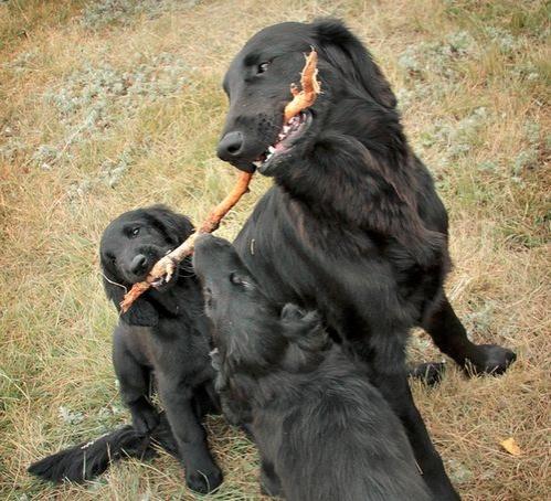 kiskutyák anyjukkal