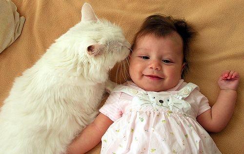 macska és a zoonózis