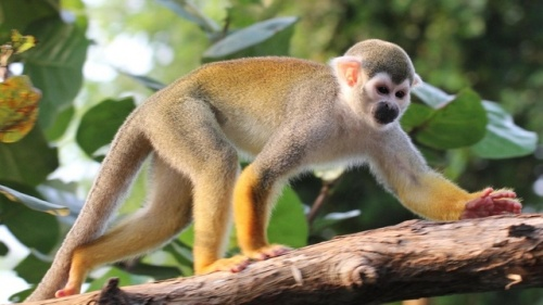 klimavaltozas-majom