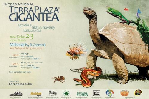 terraplaza_gigantea_2012