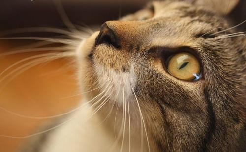 macska beszéd, macska kommunikáció
