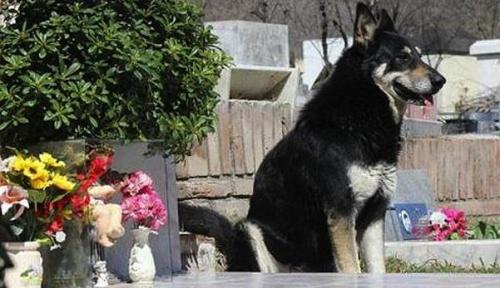 kutya_orzi_gazdajat