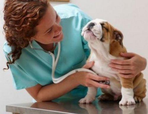 kutya_influenza2