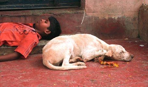 india-kobor-kutya-f1
