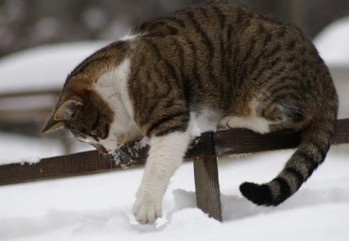 macska_jatszik_a_hoban12