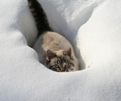 macska_jatszik_a_hoban13