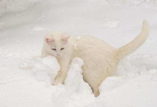 macska_jatszik_a_hoban15