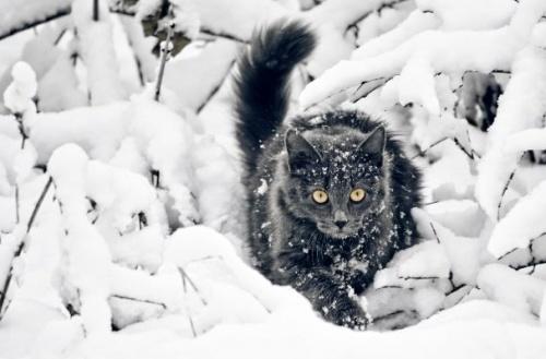 macska_jatszik_a_hoban16