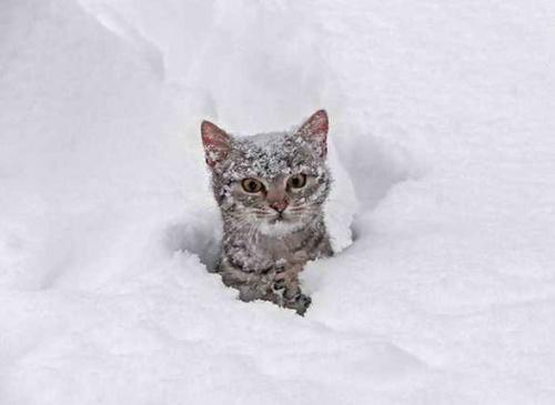 macska_jatszik_a_hoban2