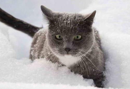 macska_jatszik_a_hoban3