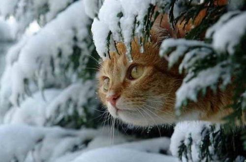 macska_jatszik_a_hoban4