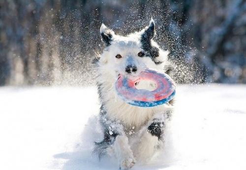 havas_kutya5