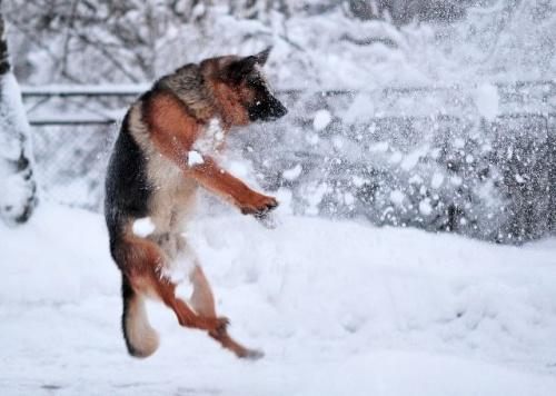 havas_kutya7