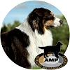 Új PROFILUM™ szárazeledelek kutyáknak: VÁLASSZON TESTRE SZABOTT TÁPLÁLÉKOT KEDVENCÉNEK!